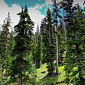 Open Subalpine Forest by Aaron Burrows