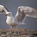 Open Wings by Karol Livote