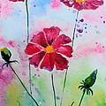 Opera Pink by Melinda Etzold