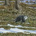 Opossum  by Lucinda V VanVleck