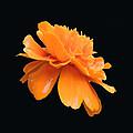 Orange by Amalia Jonas