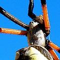 Orange And Black Spider Legs by Marilyn Burton
