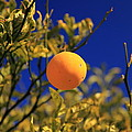 Orange And Blue Sky by Scott Hill