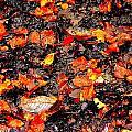 Orange And Brown by Nik Watt