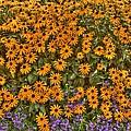 Orange And Purple Daises by Jim Lepard