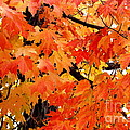 Orange And Reds And Some Yellow Too by Eunice Miller