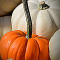 Orange And White Pumpkins by Julie Palencia
