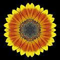 Orange And Yellow Sunflower Flower Mandala by David J Bookbinder