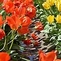 Orange And Yellow Tulips by Jan Noblitt
