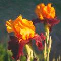 Orange Bearded Irises by Omaste Witkowski