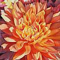 Orange Beauty by Amanda Schuster