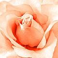 Orange Blossom by Angie Mahoney