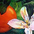 Orange Blossom by Michal Madison