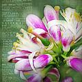 Orange Blossom Special by Judi Bagwell
