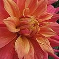 Orange Blossom Special by Monnie Ryan