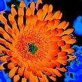 Orange Burst by John Le Brasseur