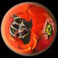 Orange Cactus Flower In A Globe by Phyllis Denton