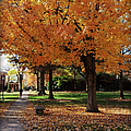 Orange Canopy - Davidson College by Paulette B Wright
