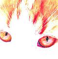 Orange Cat Eyes by Anita Lewis