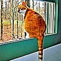 Orange Cat In Window by Rebecca Korpita