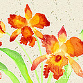 Orange Cattleya Orchids Watercolor Painting by Beverly Claire Kaiya