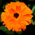 Orange Country Flowers - Impressionist Series by Doc Braham