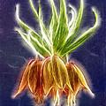 Orange Crown Imperial Flowers Fritillaria Imperialis by Odon Czintos