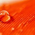 Orange Crush by Lauri Novak