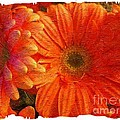 Orange Daisies Painterly With Border by Barbara Griffin