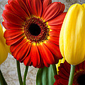 Orange Daisy With Tulips by Garry Gay
