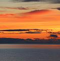 Orange Dawn Rising by Rachel Cohen