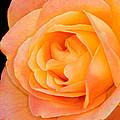 Orange Delight by Dave Mills