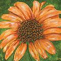 Orange Echinacea by Lucinda V VanVleck