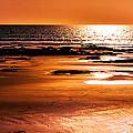 Orange Evening by Phill Petrovic