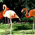 Orange Flamingo by Kingsuk Mukherji