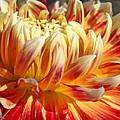 Orange Floral Art Dinner Plate Dahlia Flower by Baslee Troutman