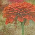 Orange Floral Fantasy by Kay Novy