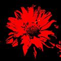 Orange Flower Burst  by Cathy Anderson