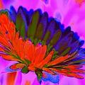 Orange Flower From Side by John Le Brasseur