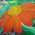 Orange Flower by Joshua Morton
