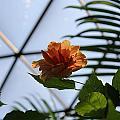 Orange Flower by Sandra Pearsall