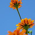 Orange Flowers On Blue Sky by Debbie Karnes
