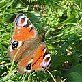 Orange Flutter by Tiffany Erdman