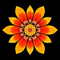Orange Gazania I Flower Mandala by David J Bookbinder