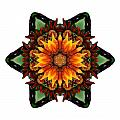 Orange Gazania IIi Flower Mandala White by David J Bookbinder