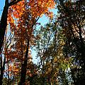 Orange Glowing Tree by Rebecca Reed