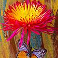 Orange Gray Butterfly On Mum by Garry Gay