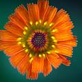 Orange Is The New Black by Shane Holsclaw