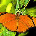 Orange Julia by Photographic Art by Russel Ray Photos