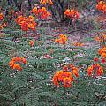 Orange by Kathleen Nash